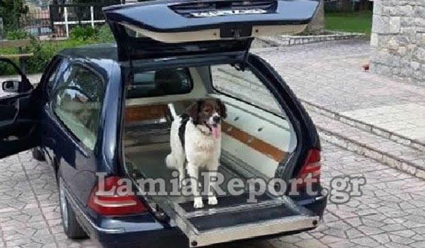 Φθιώτιδα: Συγκλόνισε σκύλος στην κηδεία του αφεντικού του