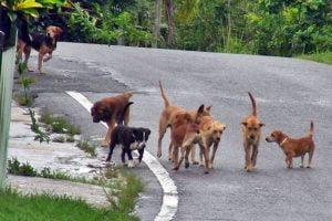 «Άγιο» είχε 17χρονος που γλύτωσε «στο παρά πέντε», από επιθέσεις αδέσποτων σκύλων