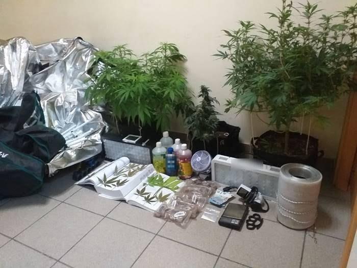 Συνελήφθη ημεδαπός στο Καρλόβασι, για καλλιέργεια, κατοχή και διακίνηση ναρκωτικών ουσιών, καθώς και για παράνομη οπλοκατοχή