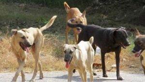 Βαγγέλης Καρράς: Περίπου 700 τα αδέσποτα σκυλιά στον Δήμο Ανατολικής Σάμου. Κάνουμε τα πάντα για να ελέγξουμε αυτό το μεγάλο πρόβλημα