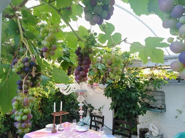 Κρεμμύδι με Σαμιώτικο κρασί;
