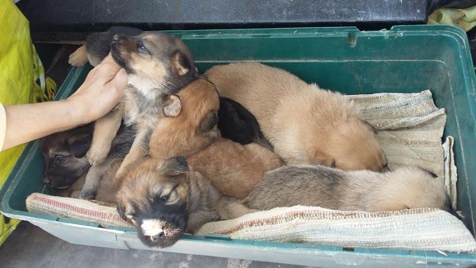 Πολλά τα προβλήματα στο καταφύγιο ζώων Ανατολικής Σάμου