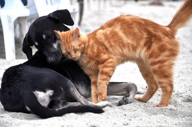 Δήμος Ανατολικής Σάμου: Ανακοίνωση για τη χορήγηση βεβαίωσης μετακίνησης για τη σίτιση αδέσποτων ζώων