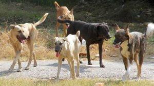 Στειρώσεις αδέσποτων ζώων συντροφιάς (σκύλων) στον Δήμο Δυτικής Σάμου