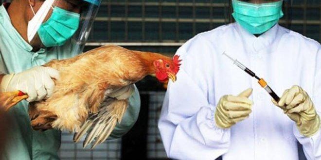 Γρίπη των πτηνών : Οι ενδείξεις που δεν πρέπει να αγνοήσετε