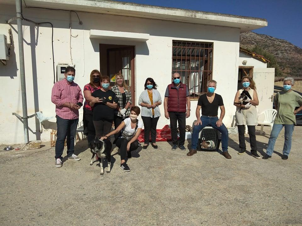Αποτελεσματική και ανθρωπιστική η στείρωση αδέσποτων ζώων