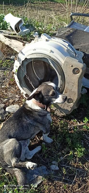 Βρήκαν σκυλάκι μόνιμα δεμένο με αλυσίδα σε κάδο πλυντηρίου- Το μετέφεραν οι εθελοντές στο καταφύγιο